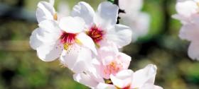 Frühlingsbeginn in Hafling - Urlaub in Südtirol