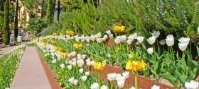 Frühlingsurlaub im Meraner Land - Blütenzauber in den Gärten von Schloss Trauttmansdorff