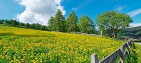 Wandern mit fantastischen Aussichten auf blumenreiche Lärchenwiesen