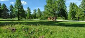 Wanderurlaub in Hafling und Reiten durch Lärchenwälder